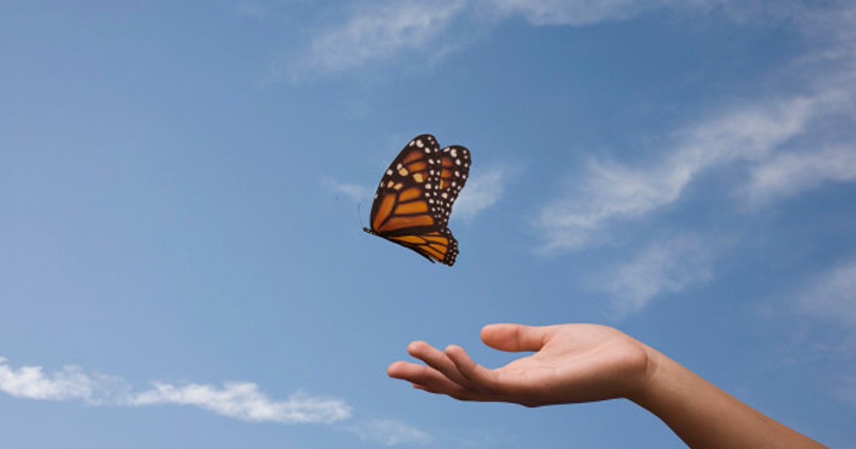 Where Have All Monarchs Gone >> Where Have All The Monarchs Gone Huffpost Canada