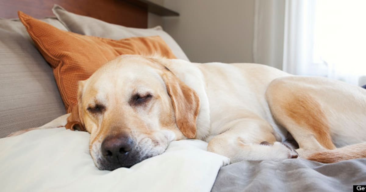 Dog Friendly Hotels Catering To More Pet Owners With Special Perks