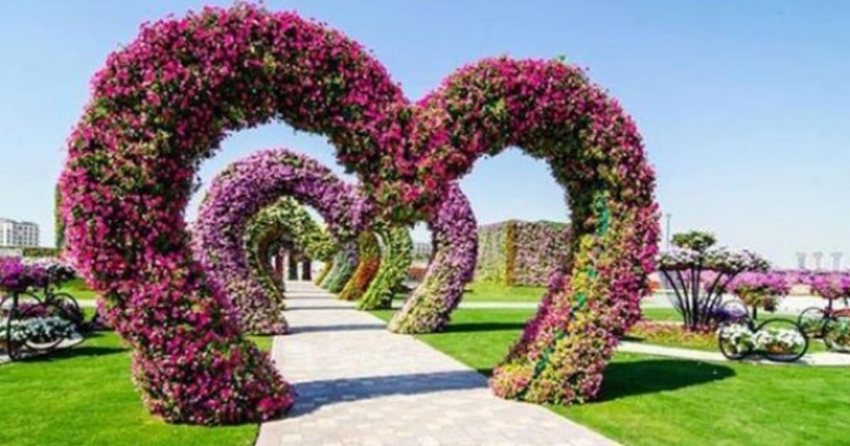 Giardini di fiori di fotocamere