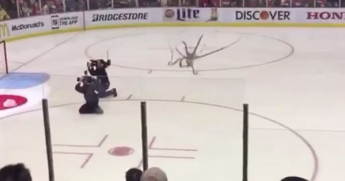 Giant octopus thrown on ice at detroit red wings game voltagebd Images