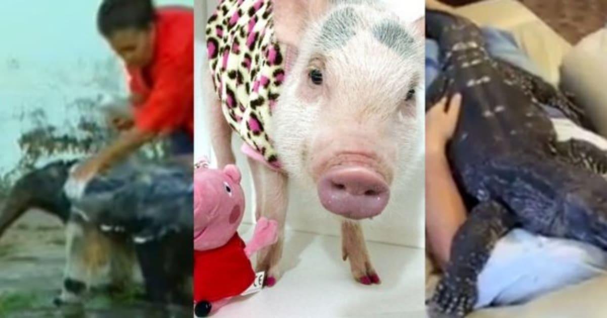 12 provas de que o amor dos seres humanos por animais não tem limites