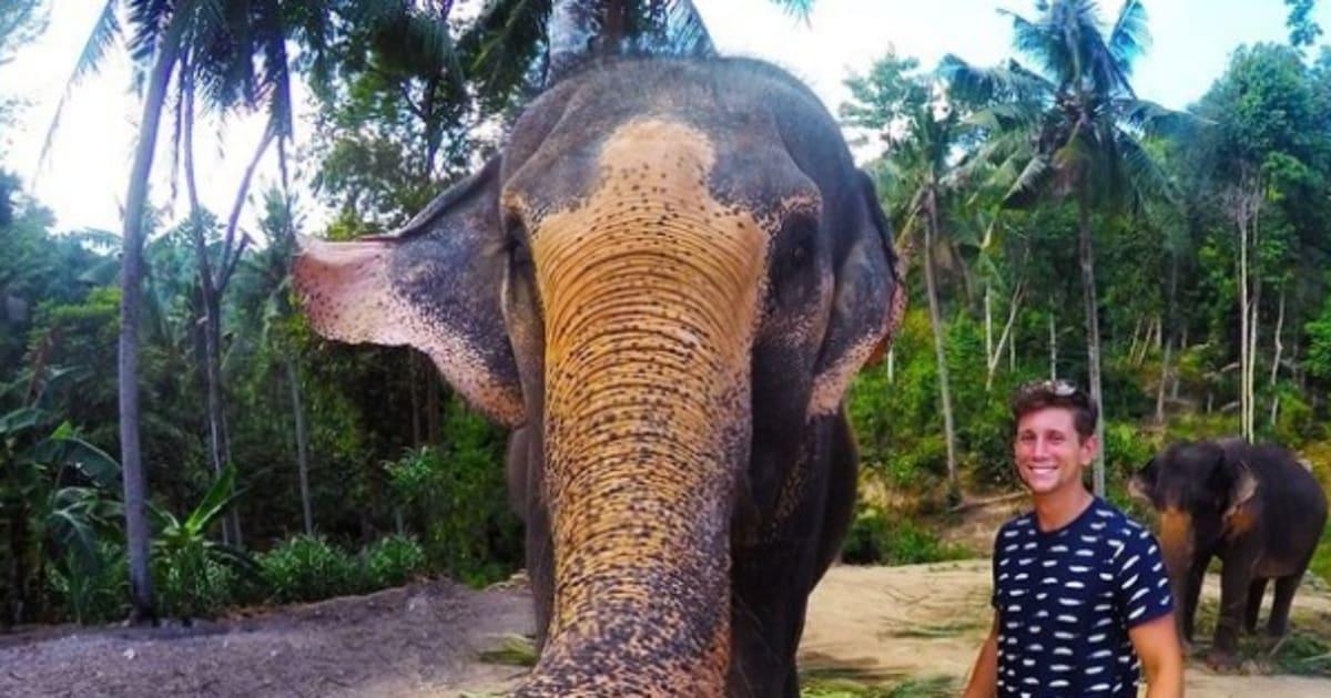 N F Elephant 2 Elephant Selfie Snappe...