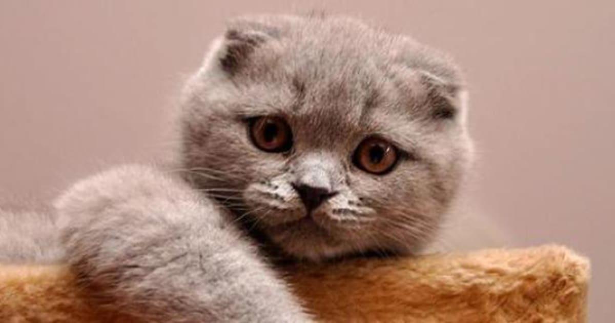 15 raças de gatos com características fora do comum