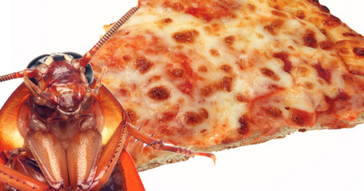 Cockroach Pizza At Calgary Stampede Off The Menu Huffpost Canada