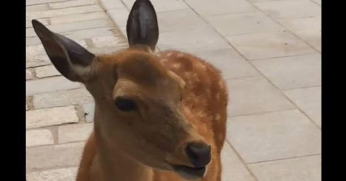 VIDÉO. Le cri de cette biche est à la fois hilarant et terrifiant | Le Huffington Post
