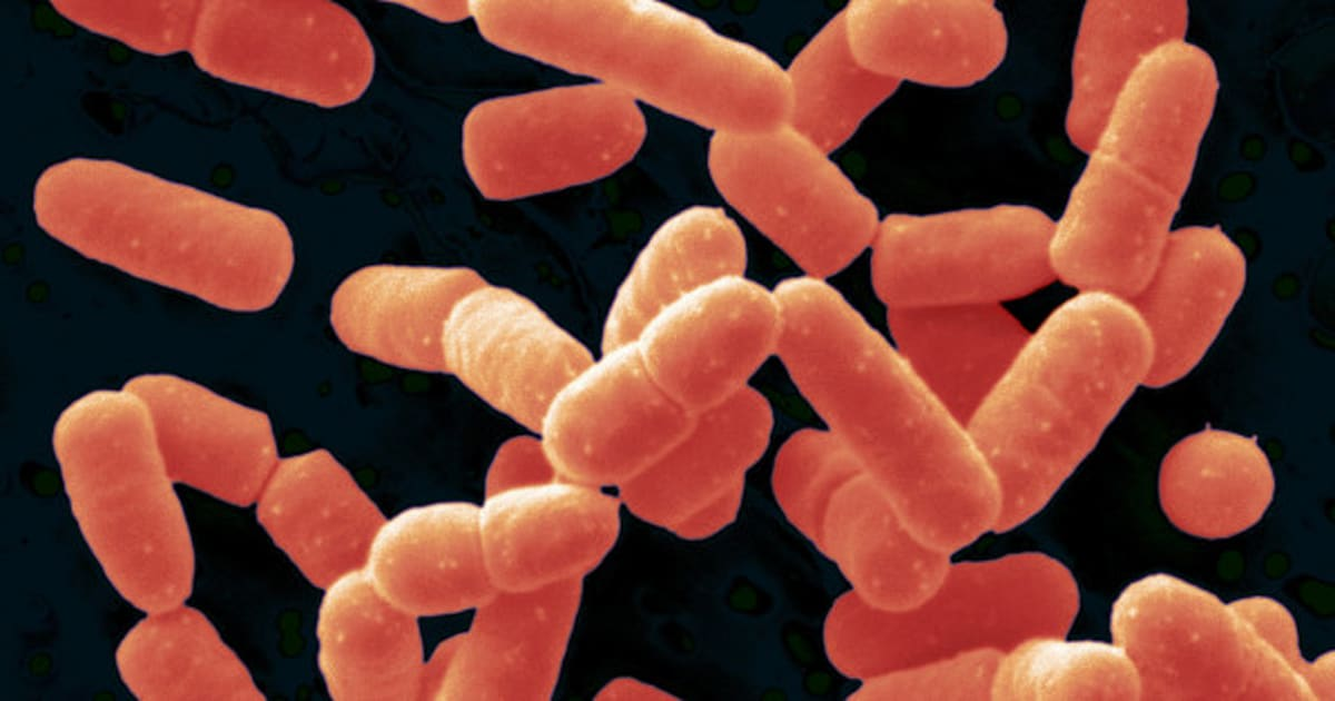 Introducing A New Probiotic: Bacillus Coagulans