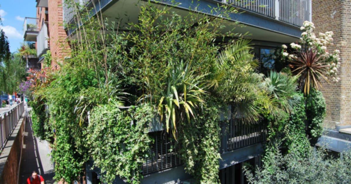 Ocho plantas para que tu terraza parezca una jungla el for Arbustos para macetas exterior