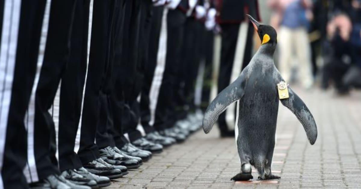ペンギンの准将「ニルス・オーラ...