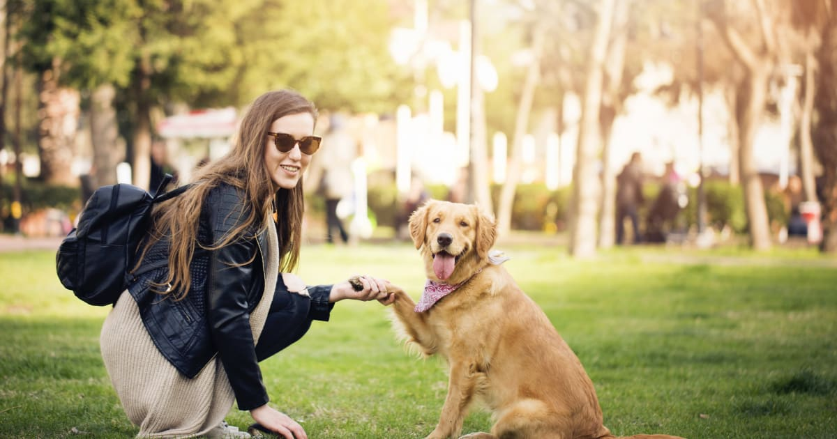 responsibilities of getting a dog Job description pet sitters may stay in the homes of their clients to care for their animals, or simply visit a certain number of times a day primary duties include ensuring dogs are exercised, have fresh food and water, and get personal play time and attention.