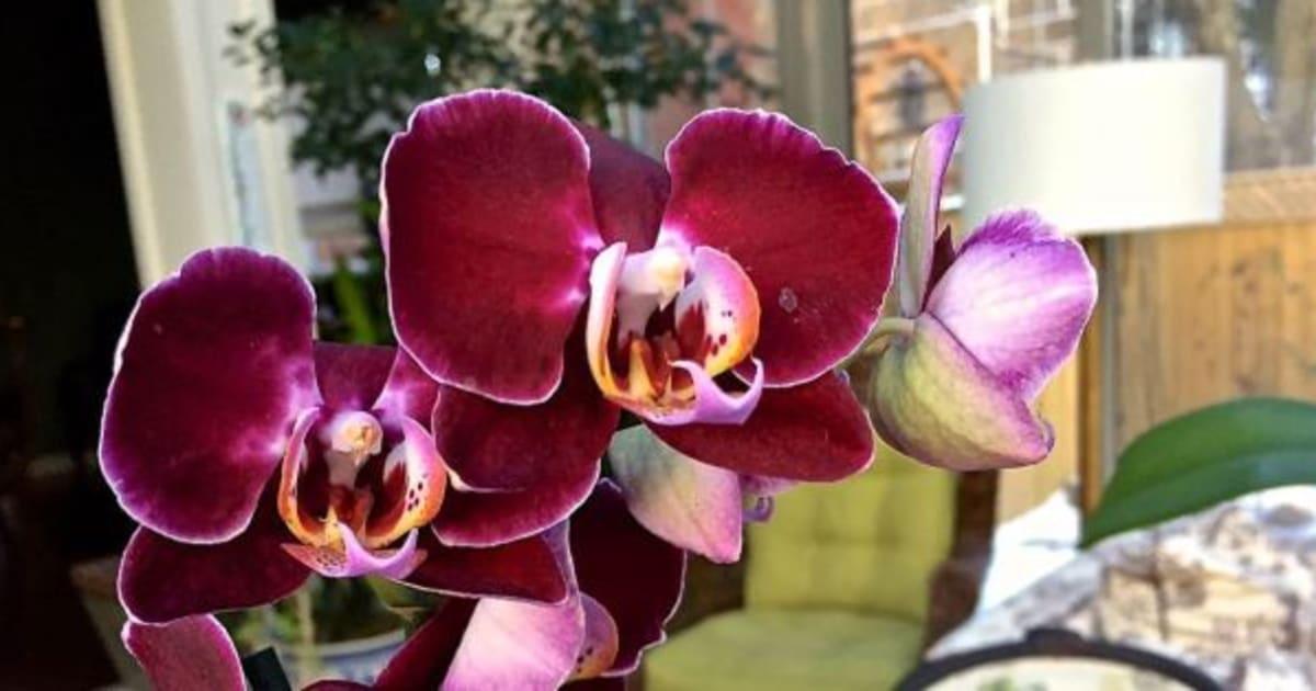 Comment cultiver et garder ses orchid es - Comment garder une orchidee ...