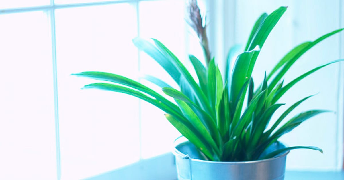 Five House Plants That Don 39 T Need A Lot Of Care