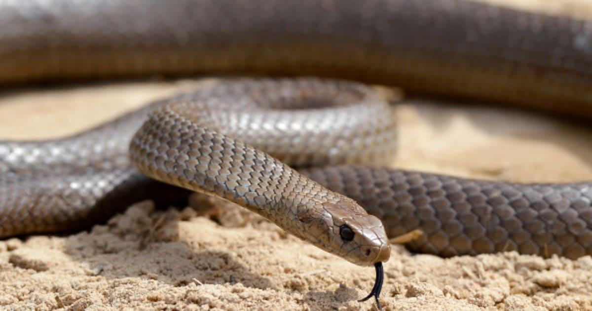 порно serpent запись видео