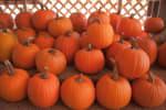 Public Domain Image/http://www.publicdomainpictures.net/view-image.php?image=53844&picture=pumpkins-on-a-pumpkin-patch