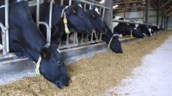 Salon de l'agriculture: la filière bovine voit