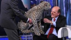 Twitter prende di mira Bersani e scherza sul giaguaro da