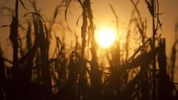 Bientôt les températures les plus chaudes depuis 11300