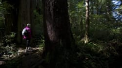 Major B.C. Forest Act Changes