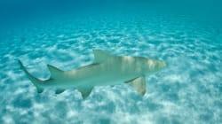Latte in polvere, squali tropicali e trascendenti di