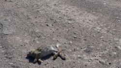 B.C. Vet Seeks Roadkill