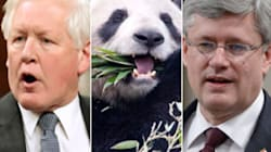 WATCH: Rae Suggests MPs Dress Like Pandas To Get PM's