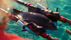 Stranded B.C. Porpoise Defies The