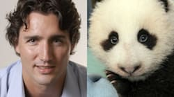 Trudeau Auctions Hair For