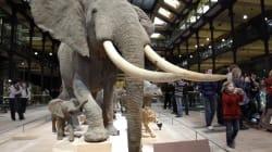 Massacre à la tronçonneuse au Muséum d'histoire