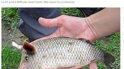 Poissons d'avril: la pêche du