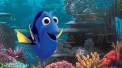 On connaît la vedette de Nemo
