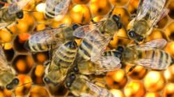 Les pesticides de nouveau mis en