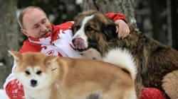 Tenerezza Vladimir Putin. Il presidente russo si rotola nella neve con i suoi