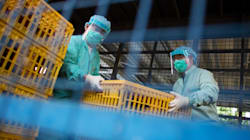 Canada's National Lab Gets A Vial Of H7N9 Flu