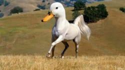 Il crée des races d'animaux sur