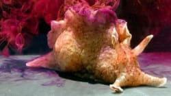 Ce mollusque guérira-t-il les malades