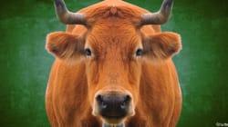 Droit des animaux : pourquoi ça coince en