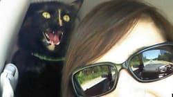 Les chats savent gâcher une photo, la preuve en 15