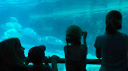 How Marineland Is Using the Law to Silence