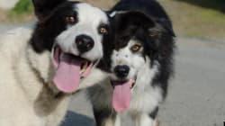 Les chiens aussi savent gâcher une photo, la preuve en 15
