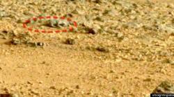Le lézard de Mars restera... un