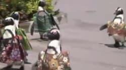 Des pingouins japonais en