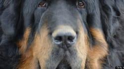 Roaming Dogs Wreak Havoc, Bite Police