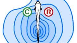 Et si on s'inspirait du sixième sens des poissons électriques? - Thomas