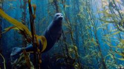 Les plus belles photos sous-marines de