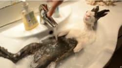 L'espressione del coniglio che fa il bagno è subito virale