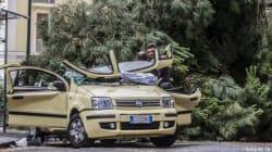 Napoli: muore schiacciata da un albero caduto sulla sua auto