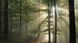 Quand la mortalité des arbres augmentent, celles des hommes