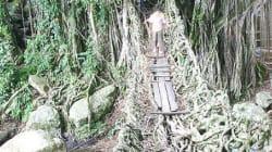 Jembatan Akar: in Indonesia il ponte fatto di radici