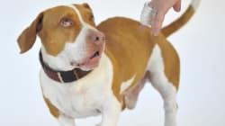 Il a gagné le concours du chien le plus laid du monde