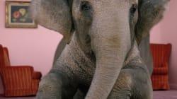 Déchiffrer l'élection de 2014: l'éléphant dans la