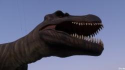 Le tyrannosaure chassait bien des proies